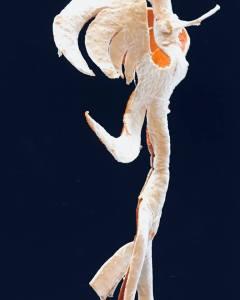 Agnes Hay Orange Peel Sculpture